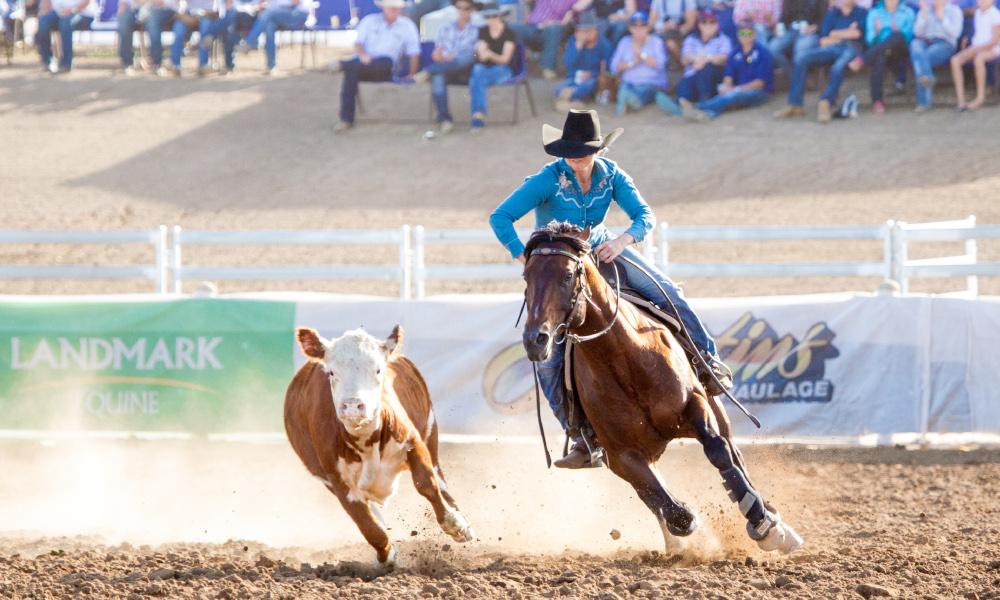 Stallion Winner - Tash Carlon
