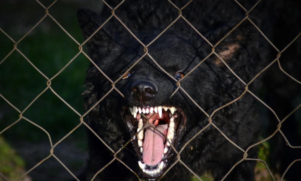 dog fence 2 stock image