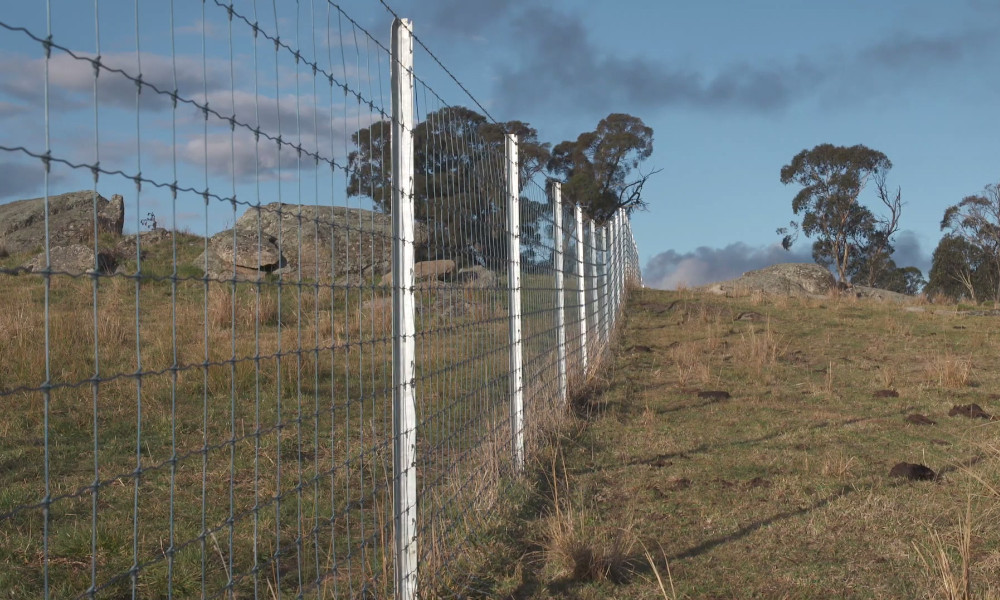 waratah fencing the fence july 2019