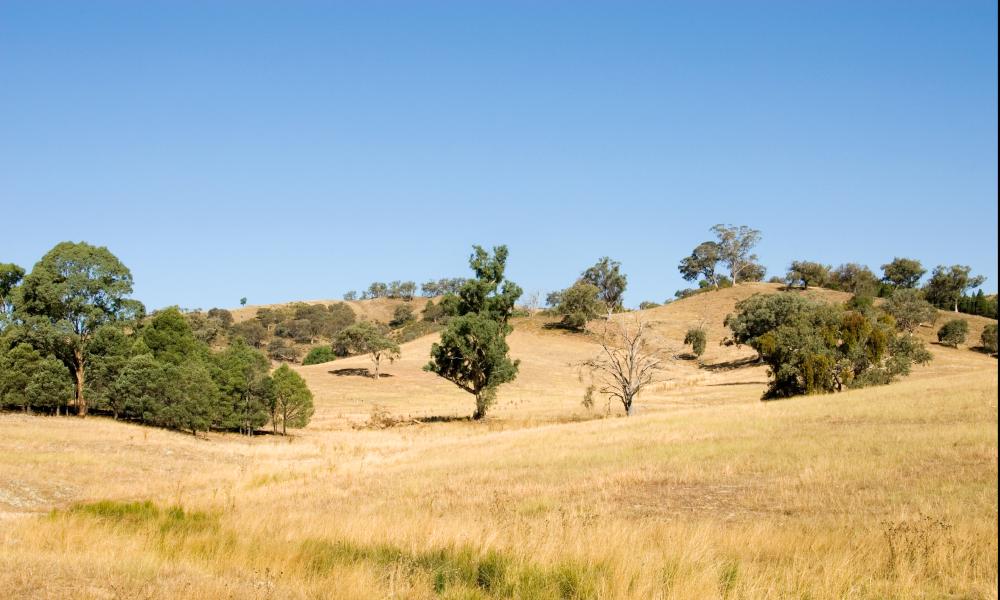 nsw farm land stock image mudgee