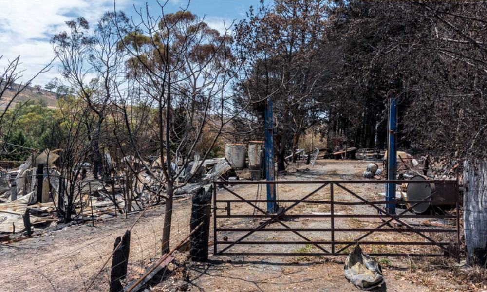 bushfire standards tf march 2020