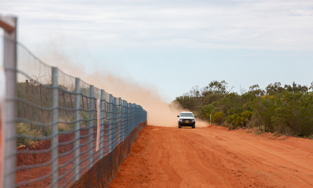 NSW Wild Dog Fence Extension project
