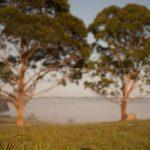 NSW Wild dog fence update