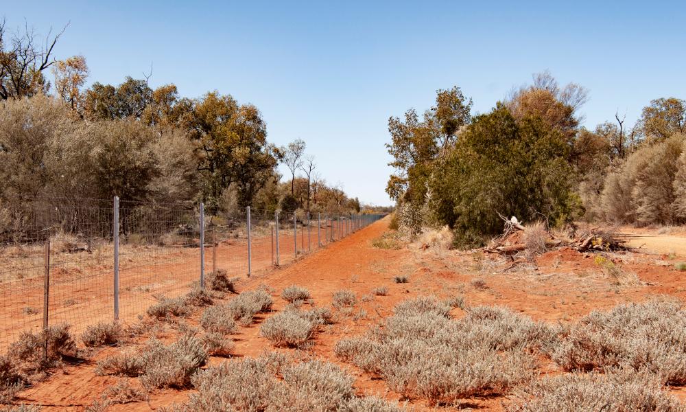 longest wild dog fence